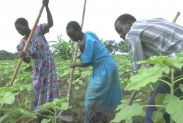 Central bank wants banks to step up farming loans