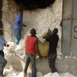 Uganda smells $650m from new plan for its cotton sector