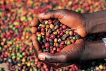 Uganda's exports remain limited with COMESA main buyers