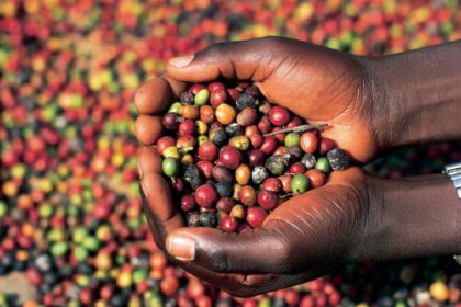 Coffee brought in nearly half a billion dollars and remains Uganda's leading cash crop